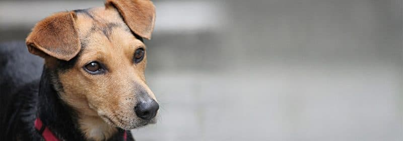 באנר אוכל לכלבים בגרגורים חנות חיות בראשון לציון