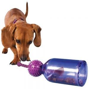 משחקים לכלבים טאג א ג'אג