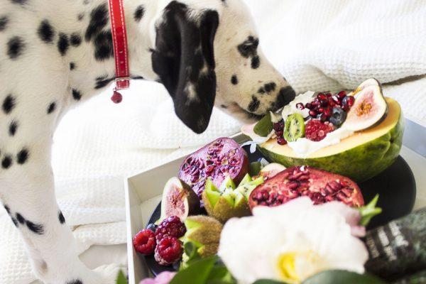 דלמטי מריח מאכלים אסורים לכלבים