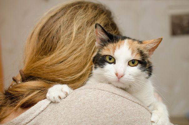 איך חתול מראה אהבה חתול מחבק אישה