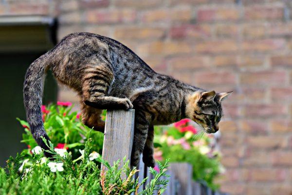 מה אומר זנב של חתול חתול דרוך קופץ