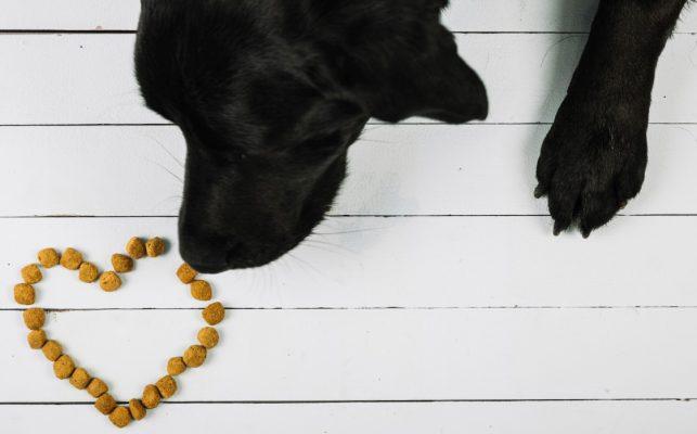 כלב אוכל אוכל לכלבים בוגרים