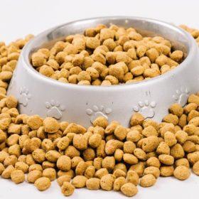 דוגמא של מזון רפואי לכלבים