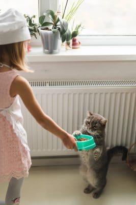 ילדה מאכילה חתול מזון לחתולים בוגרים