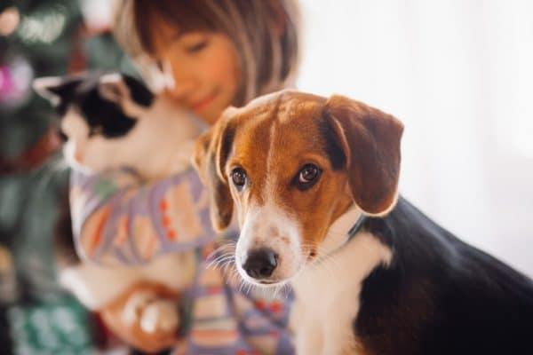 איך לגדל כלב וחתול יחד