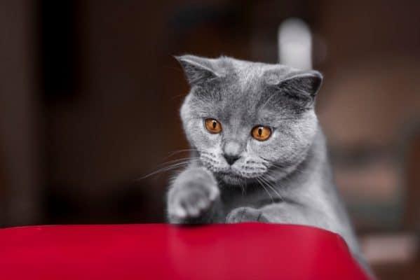 אוכל לחתולים