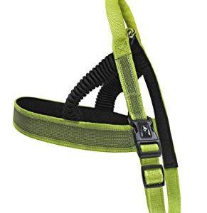 רצועות לכלבים בצבע ירוק
