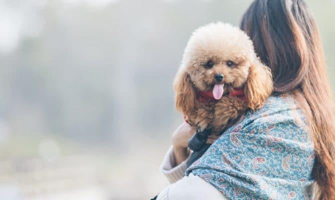 כלב מטופח ונקי שמסתפר בגרגורים - חנות חיות בראשון לציון