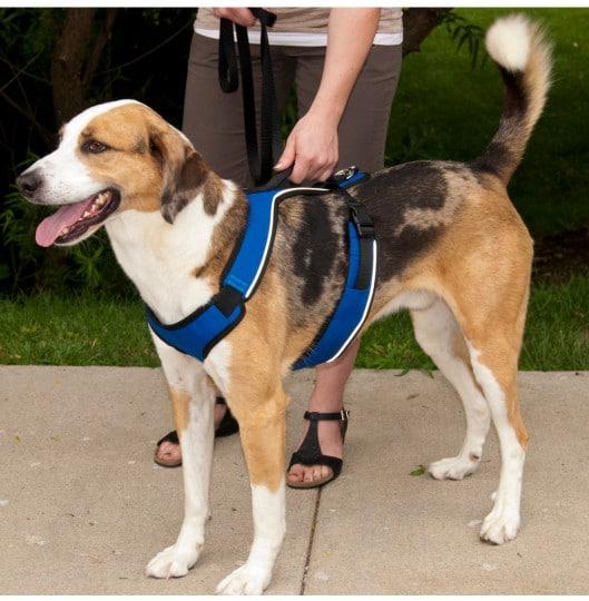 רצועה לכלב בצבע כחול