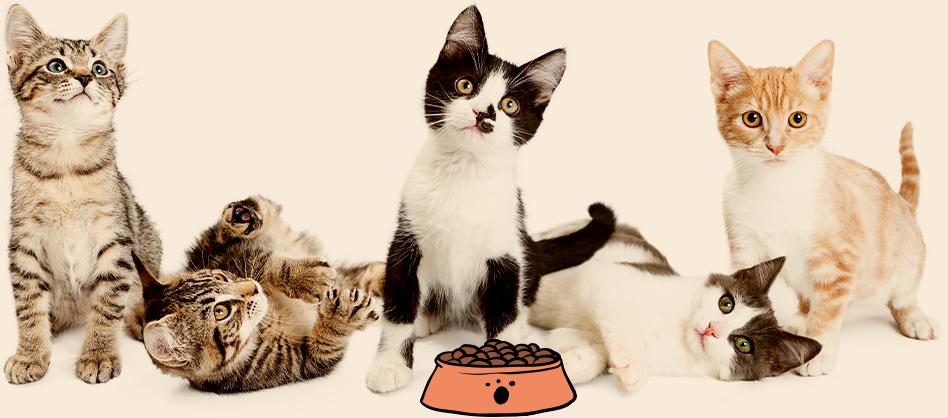 חתולים ליד קעת מזון לחתולים