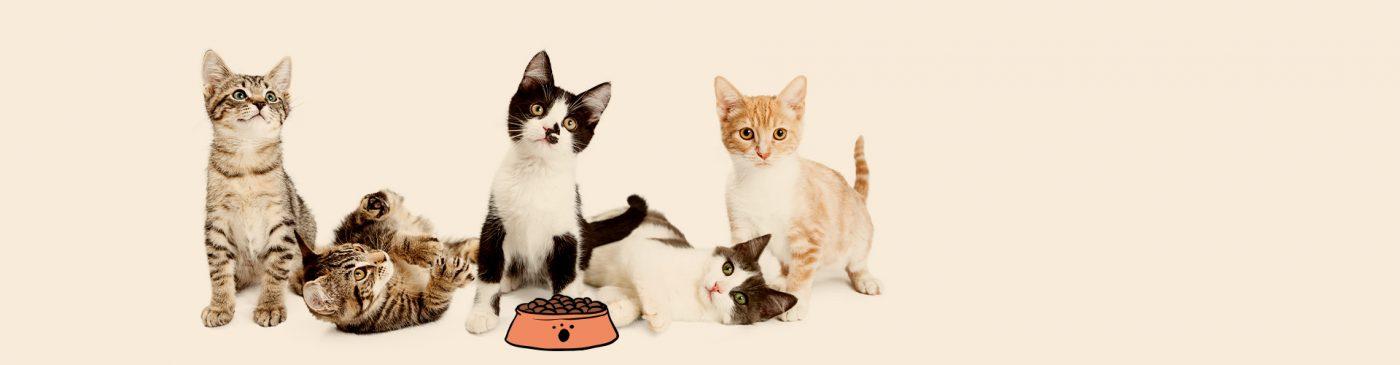 חתולים ליד קערת אוכל לחתולים