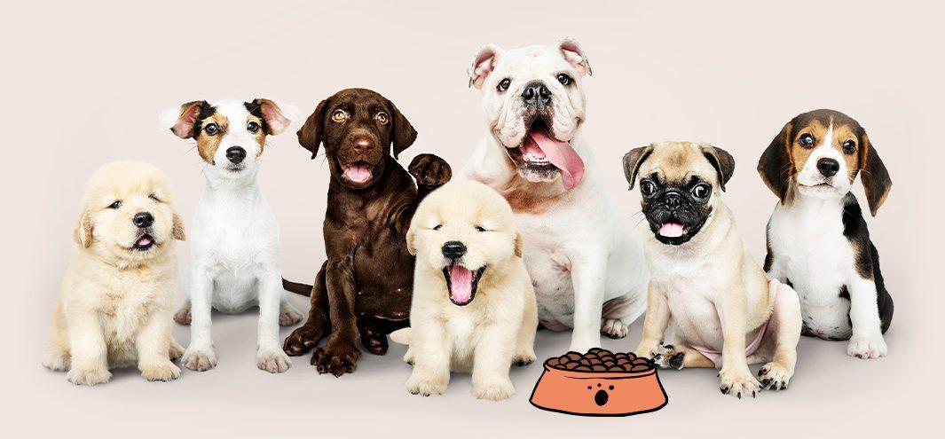 סוגי כלבים ליד קערת מזון לכלבים