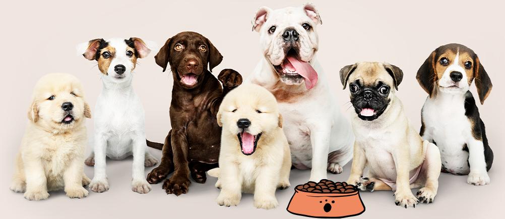 כלבים ליד קערת אוכל לכלבים
