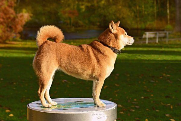קולרים מיוחדים לכלבים