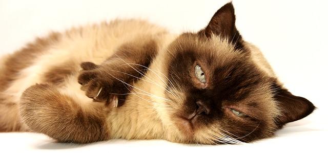 איך לטפל בגור חתולים