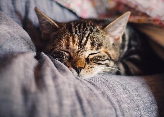 מעבר דירה עם חתול