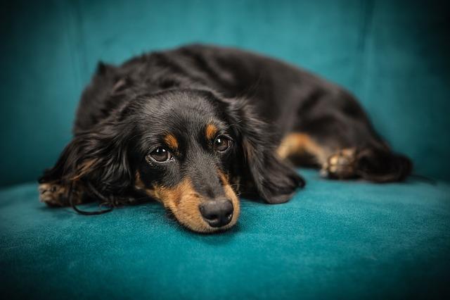 איך ללמד כלב לעשות צרכים במקום מסוים