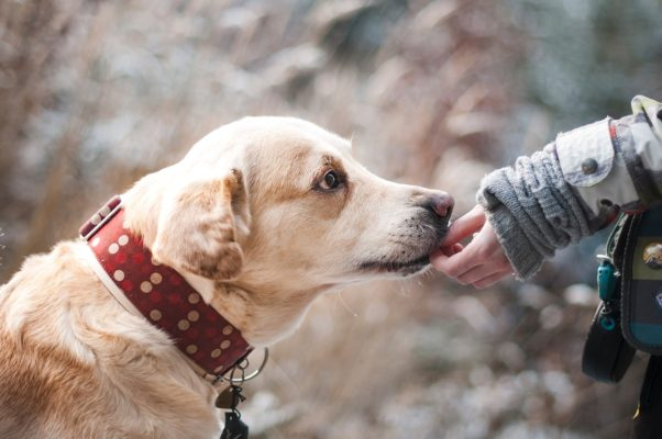 איפה כלבים אוהבים שמלטפים אותם?