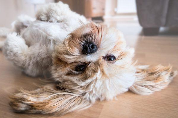 איך משאירים כלב לבד בבית?