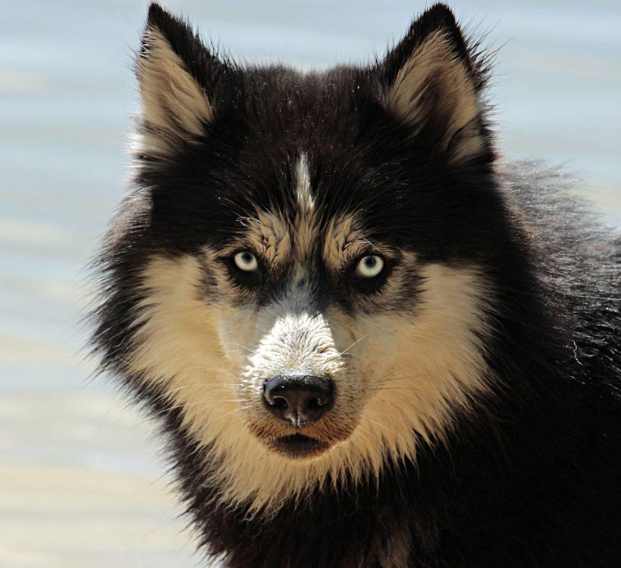איזה כלבים אסור לספר?