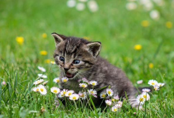 למה חתול מתחכך?