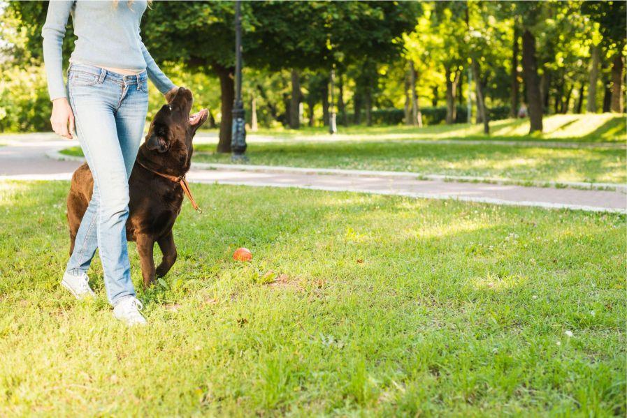 תמונה של משחק עם כלבים