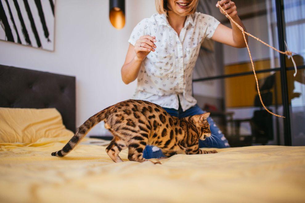 איך משחקים עם חתול