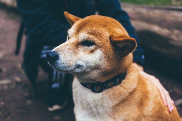 מה מותר לתת לכלב לאכול