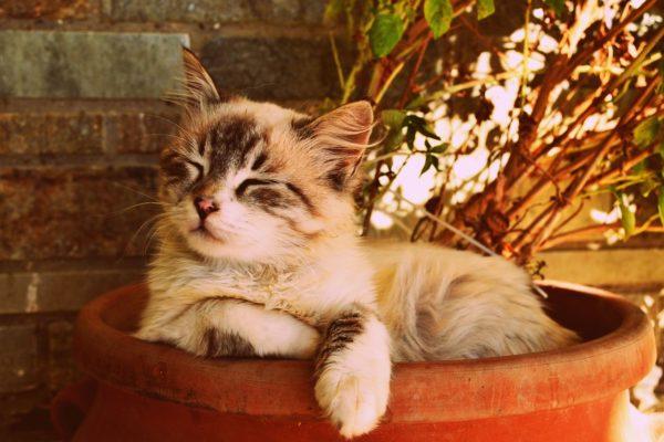 תמונה של ריח רע מהפה חתול