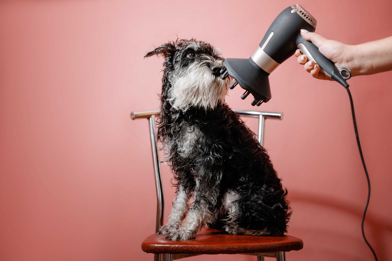 מספרה לכלבים בראשון לציון